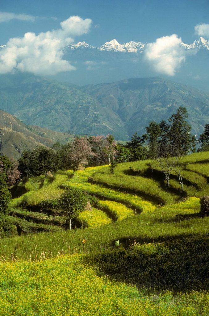 Helambu trekking – groene terrasvelden tijdens de trekking
