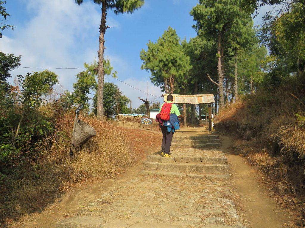 Helambu trekking – wandelen op aangelegde paden door naaldbossen