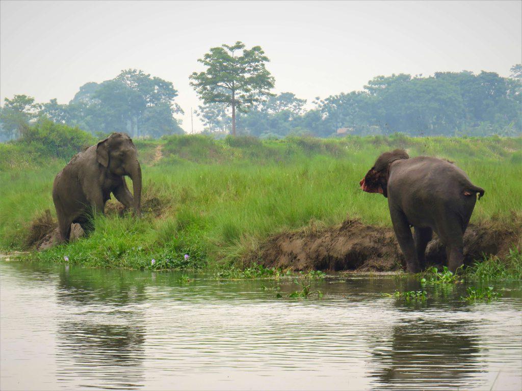 Hoogtepuntenreis – Chitwan – spelende olifanten bij de rivier