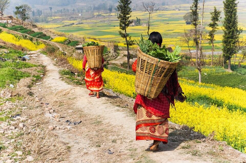 Kathmandu vallei trekking – vrouwen aan het werk op het land met een doko op hun rug