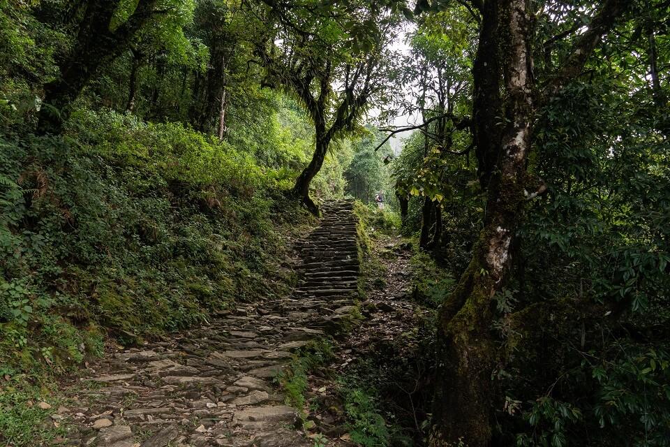 Mardi Himal trekking – de trekking start door groene dichtbeboste regio
