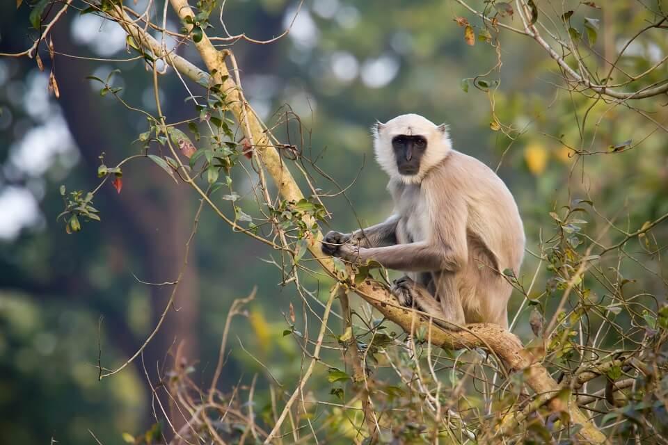 Safari in het Zuiden van Nepal – Bardia National Park (2)