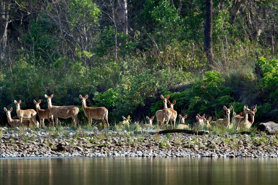 Safari in het Zuiden van Nepal – Bardia National Park (3)