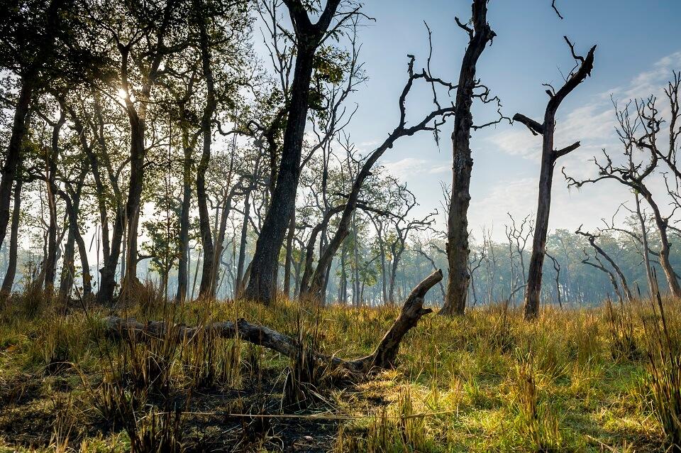 Safari in het Zuiden van Nepal – de jungle van Bardia national park (1)