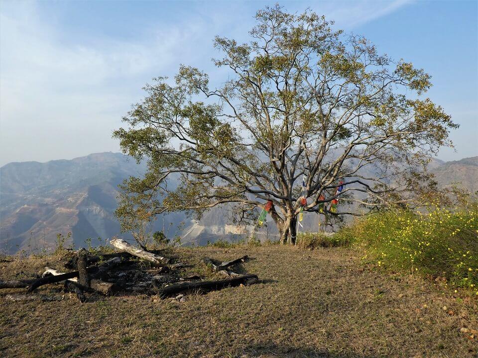 Indigenous people trek – boom met gebedsvlagjes in een dorp